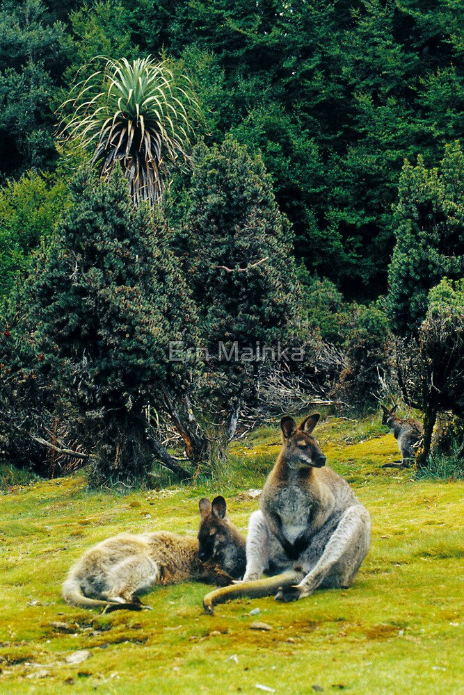 Bennett's Wallabies by Ern Mainka