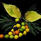 Wild berries by jerry  alcantara