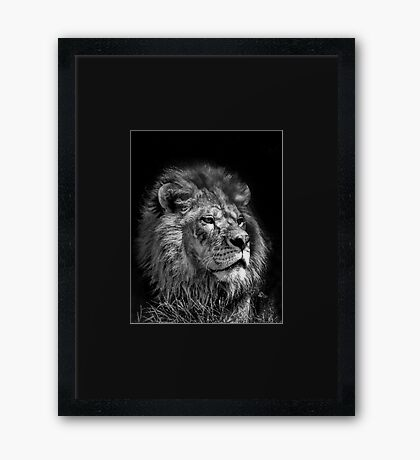 Proud Young Lion Framed Print