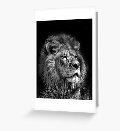 Proud Young Lion Greeting Card