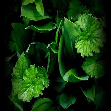 Green leaf by katpix