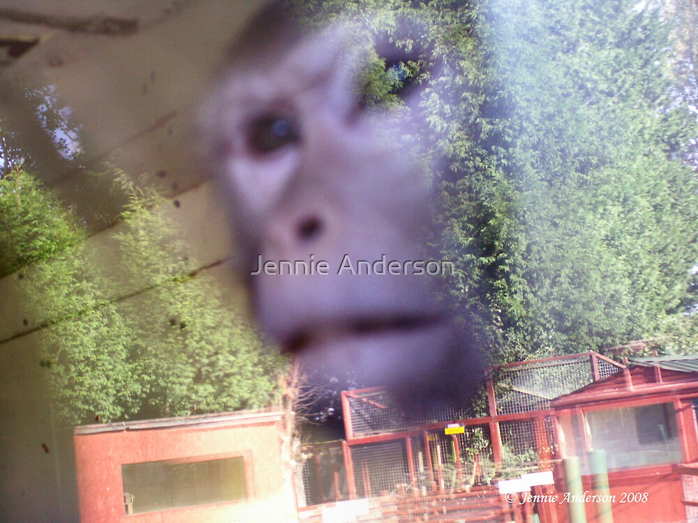 Please set me free by Jennie Anderson