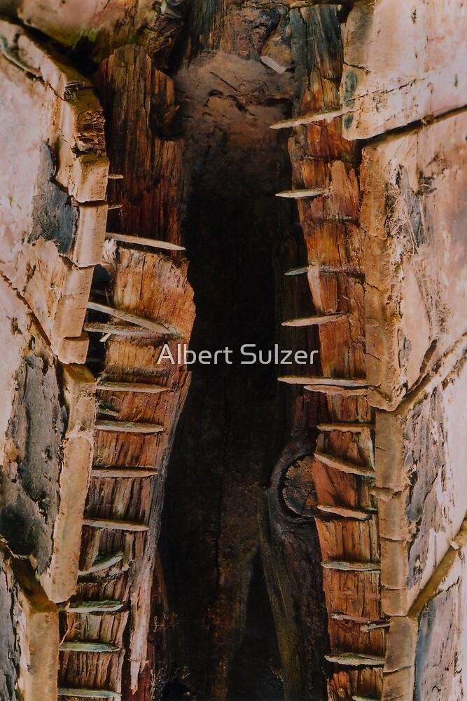 Urban Croc. by Albert Sulzer