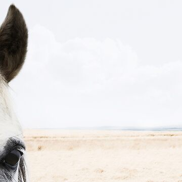 Wild Horse by ernest123