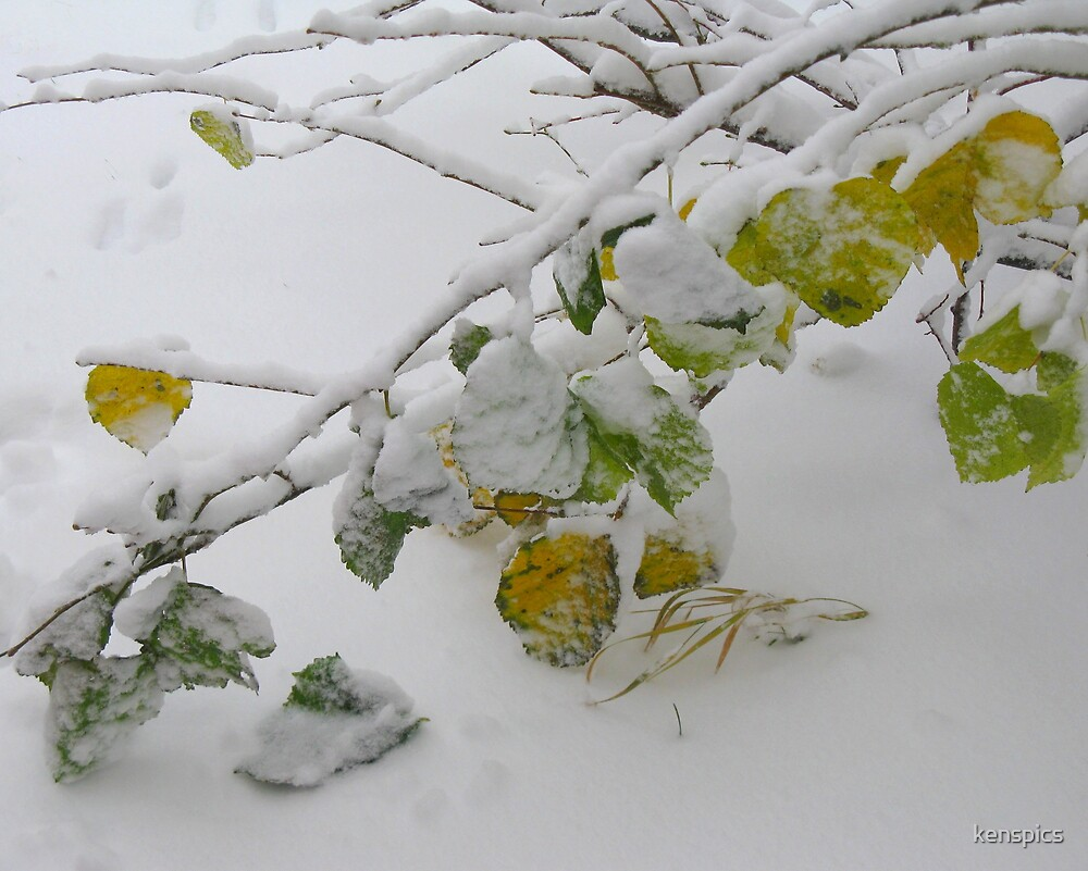 Winter - First Fruits #1 by kenspics