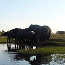 'Just Chilling......' - Chobe, Botswana by pennies4eles
