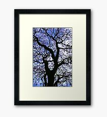 Spring In The Valley Framed Print