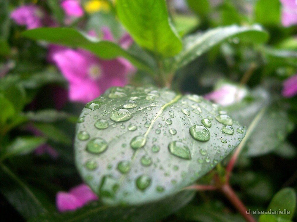 Rain Drops by chelseadanielle