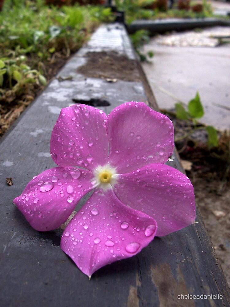 Flower by chelseadanielle