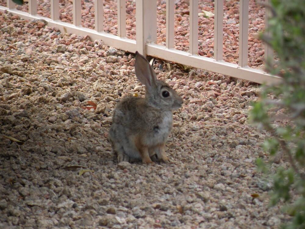 Rabbit in my yard! by Bonnie Pelton