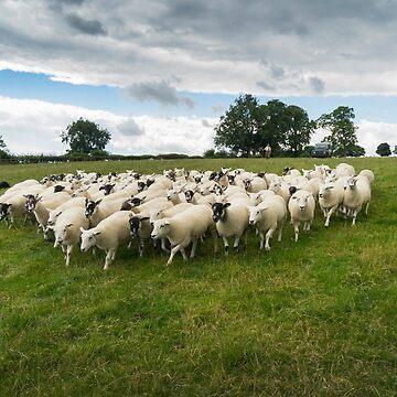 Working Farm Dog by ernest123