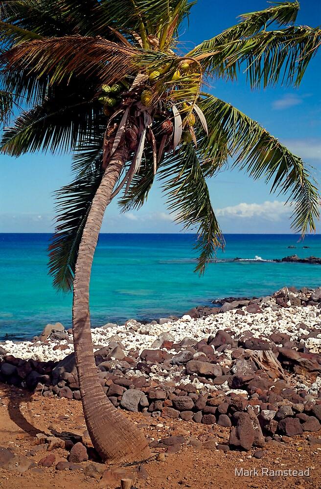 Hawaiian Palm Tree by Mark Ramstead