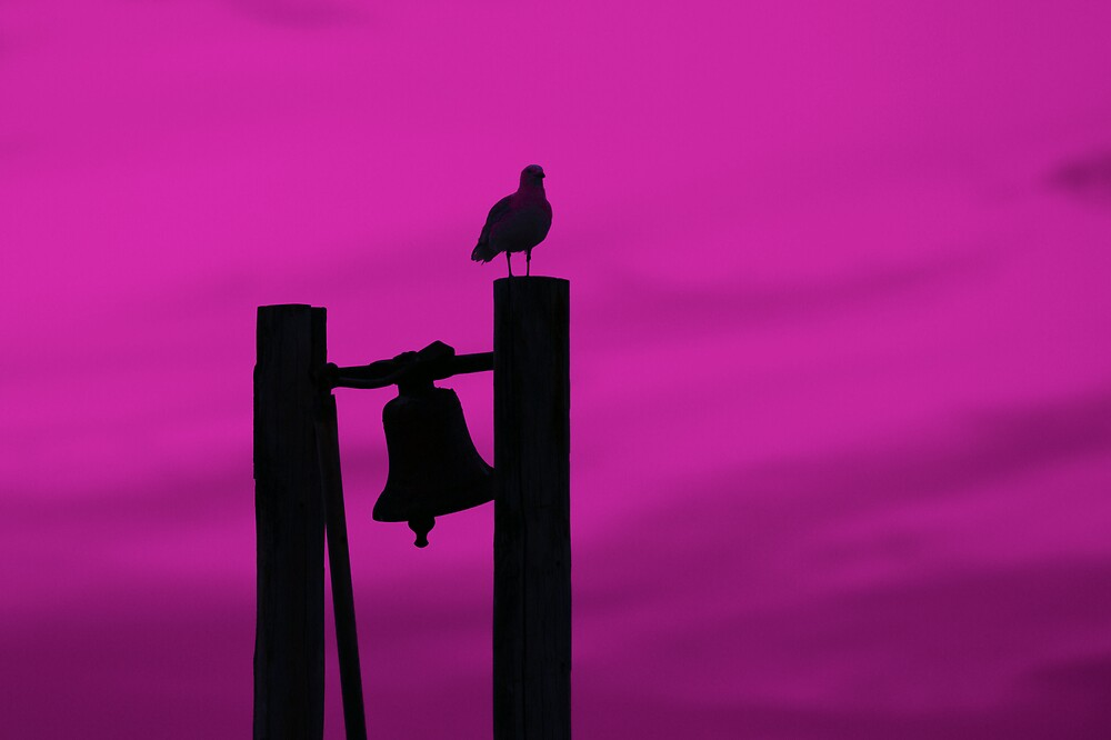 Bellbird by roger smith