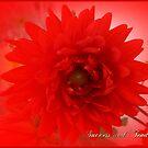 Floral July by EnchantedDreams