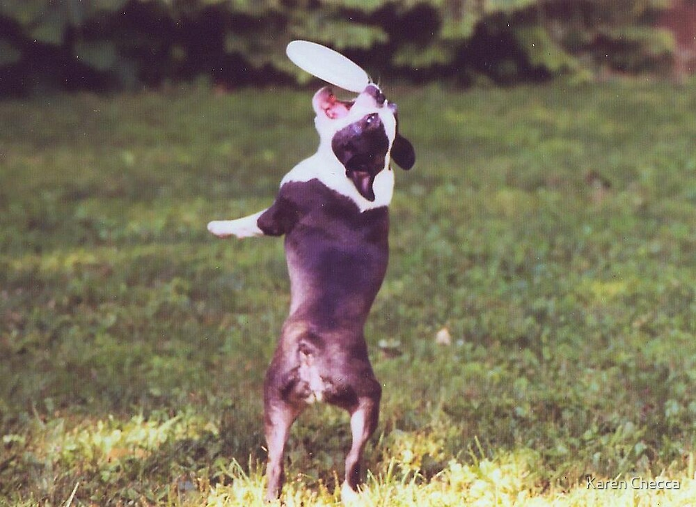 Frisbee Dog by Karen Checca
