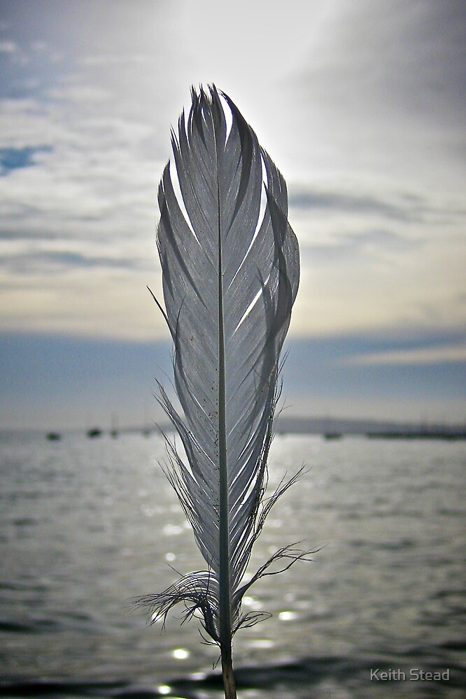 Feather against the sun by Keith Stead