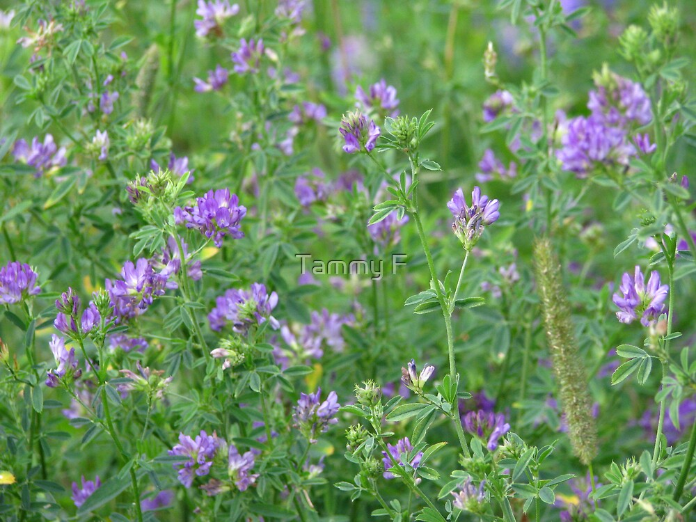 Subtle Purple by Tammy F
