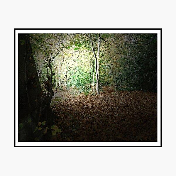 Autumn Walk - 1st Edition Photographic Print