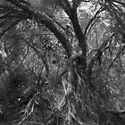 Old Sheoak by Ben Loveday
