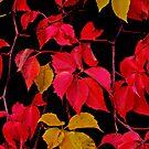 Natures Beauty by jerry  alcantara