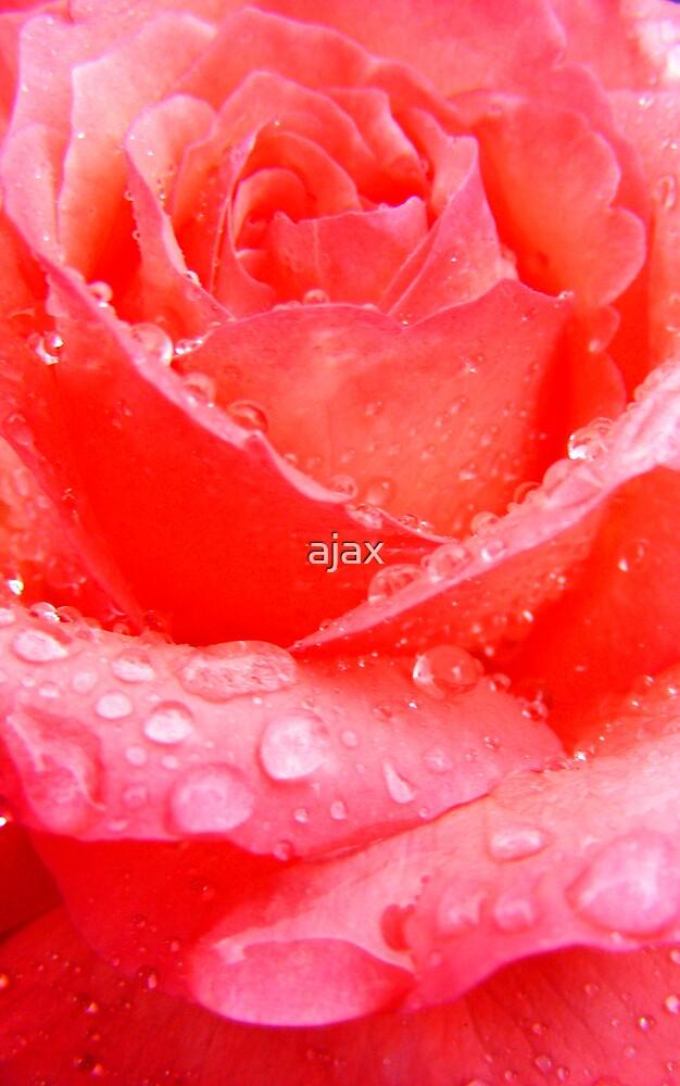 rose by ajax