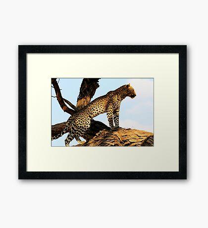 Lookout Framed Print