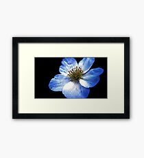 Blue Flower Close-Up Framed Print