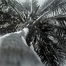 Climbing Palm by Bill Wetmore