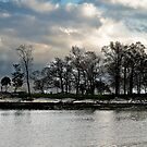 cloud. trees. water. by rafaj