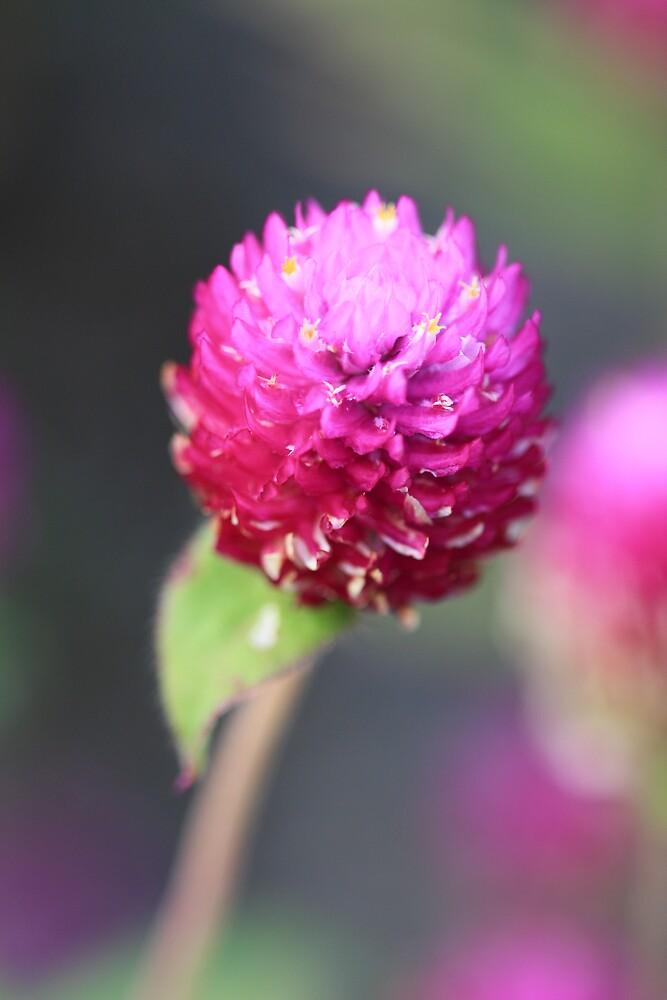 purple for romance by malina