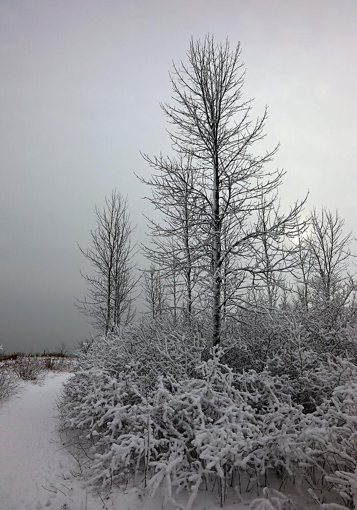 Winter 3 by Kurt Kamka