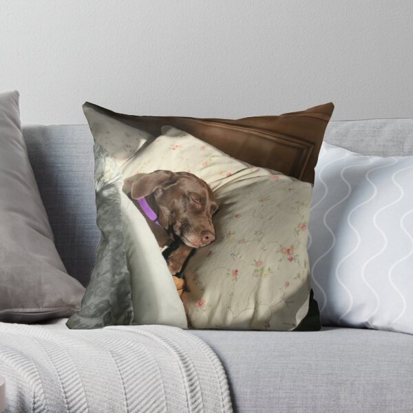 Let Sleeping Dogs Lie Throw Pillow