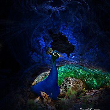 Peacock by kathmartin