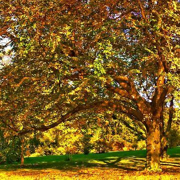 Arnold Arboretum at beginning of fall by LudaNayvelt