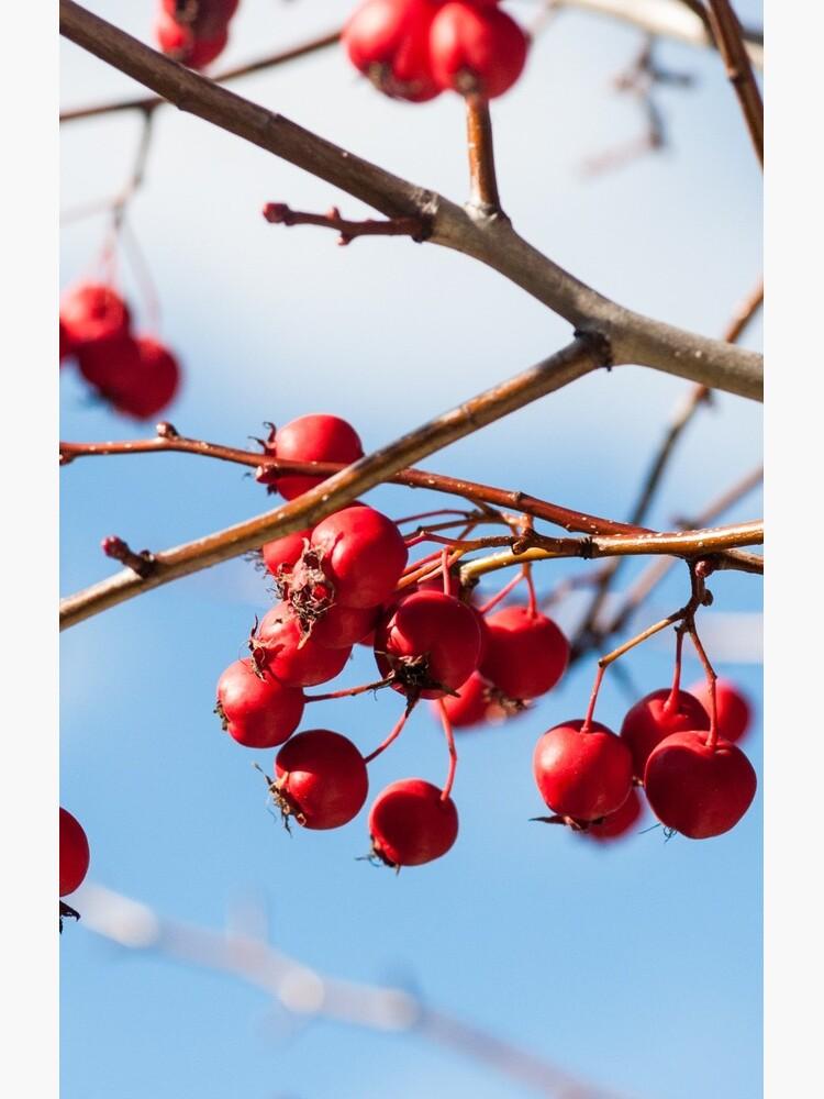 berry nice by sapaho
