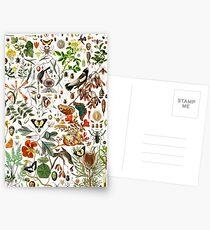 Biologie 101 Postkarten