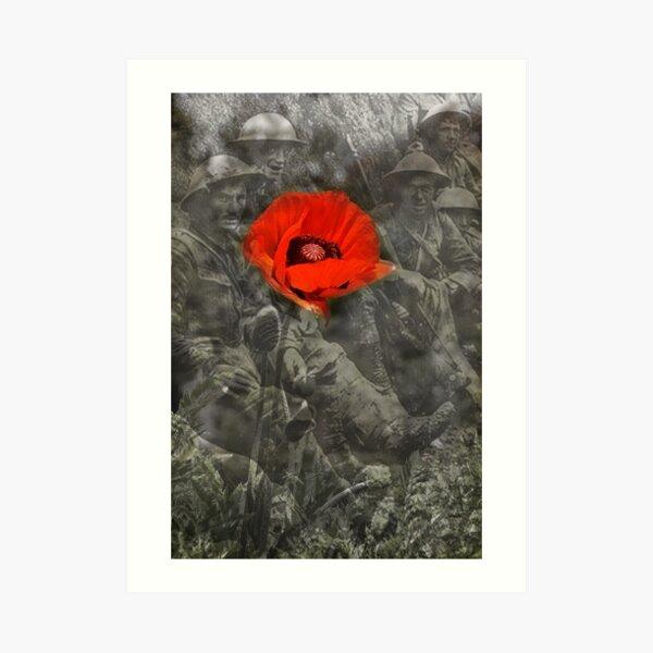 In Flanders Fields Art Print