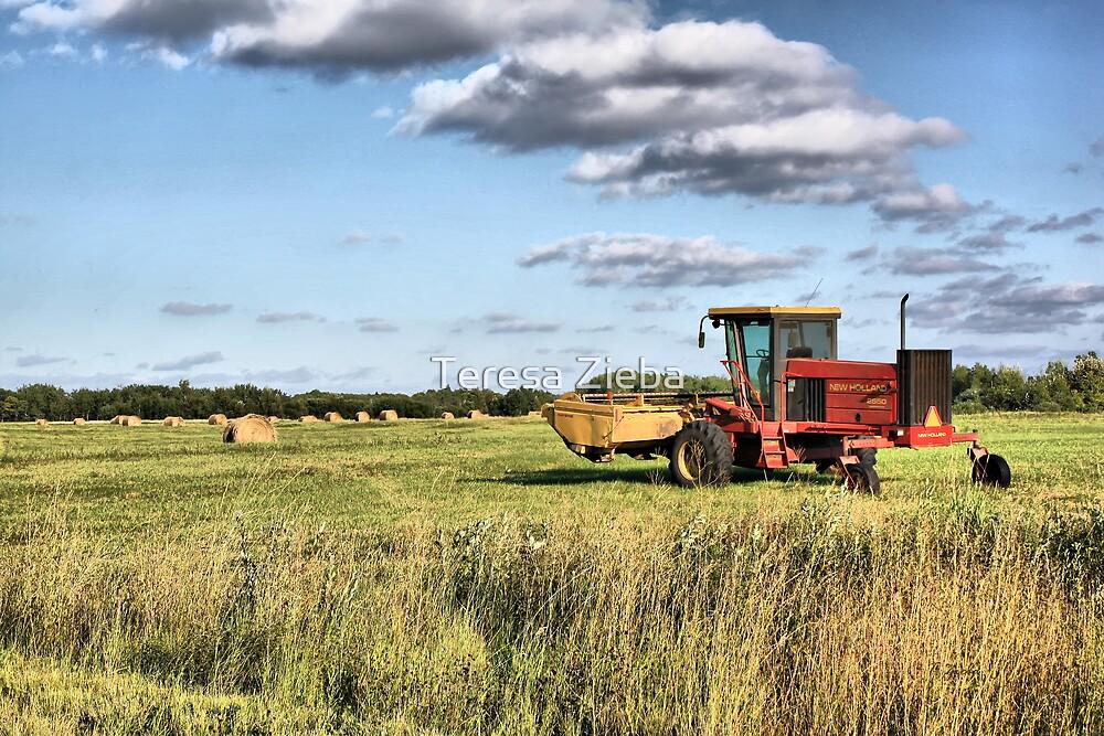 Harvest Time by Teresa Zieba