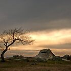 One Lonely Tree by Christine Smith