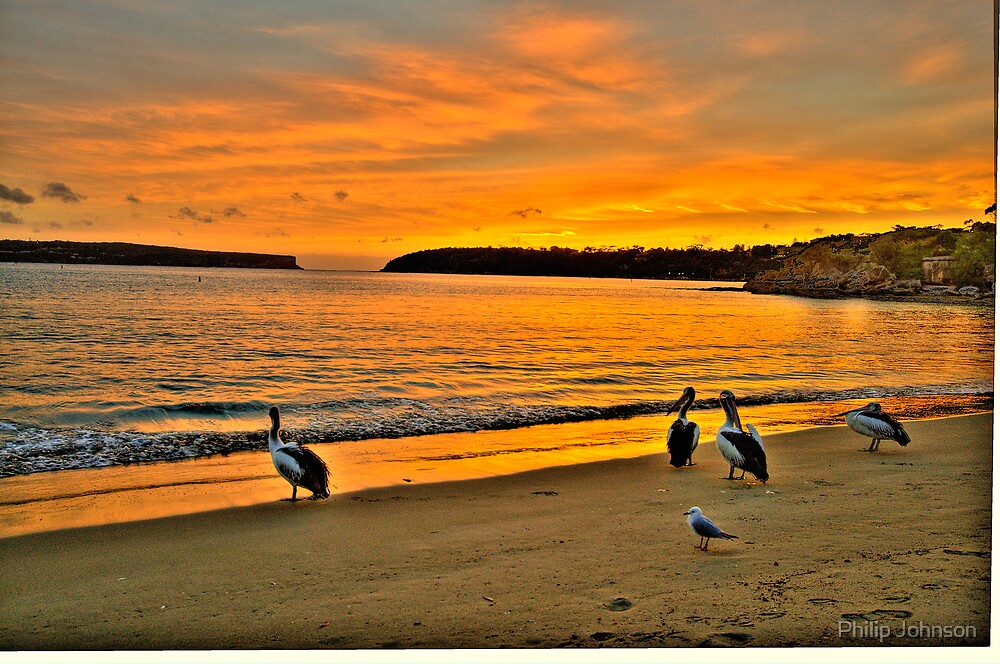 Morning Stroll - Balmoral Beach - The HDR Series by Philip Johnson