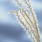 Winter Softness by lorilee