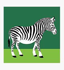 A zebra Z Photographic Print
