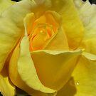Yellow Glow by Susan Moss