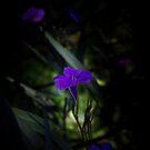 Violette Blumen von VanGalt