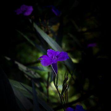 Violet flowers by VanGalt