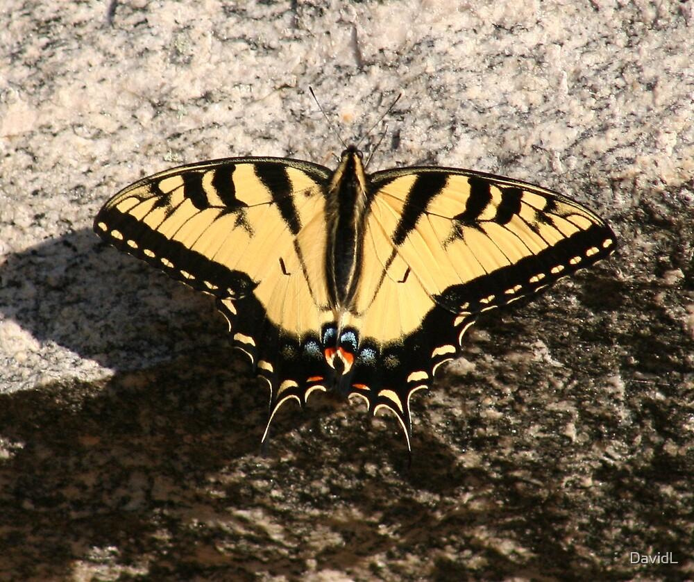 Butterfly by DavidL