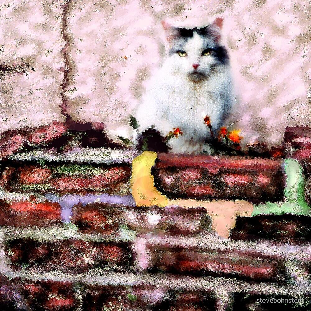 Cat on a Flower Bed by stevebohnstedt