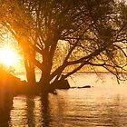 Hot Velvety Sunshine on the Shore of the Lake by Georgia Mizuleva