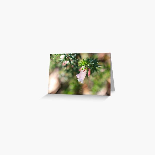 Sunlit Pink Heath  Greeting Card
