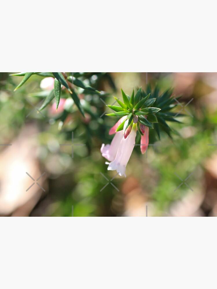 Sunlit Pink Heath  by LisaGHunter